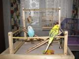 Игровая площадка для попугайчика
