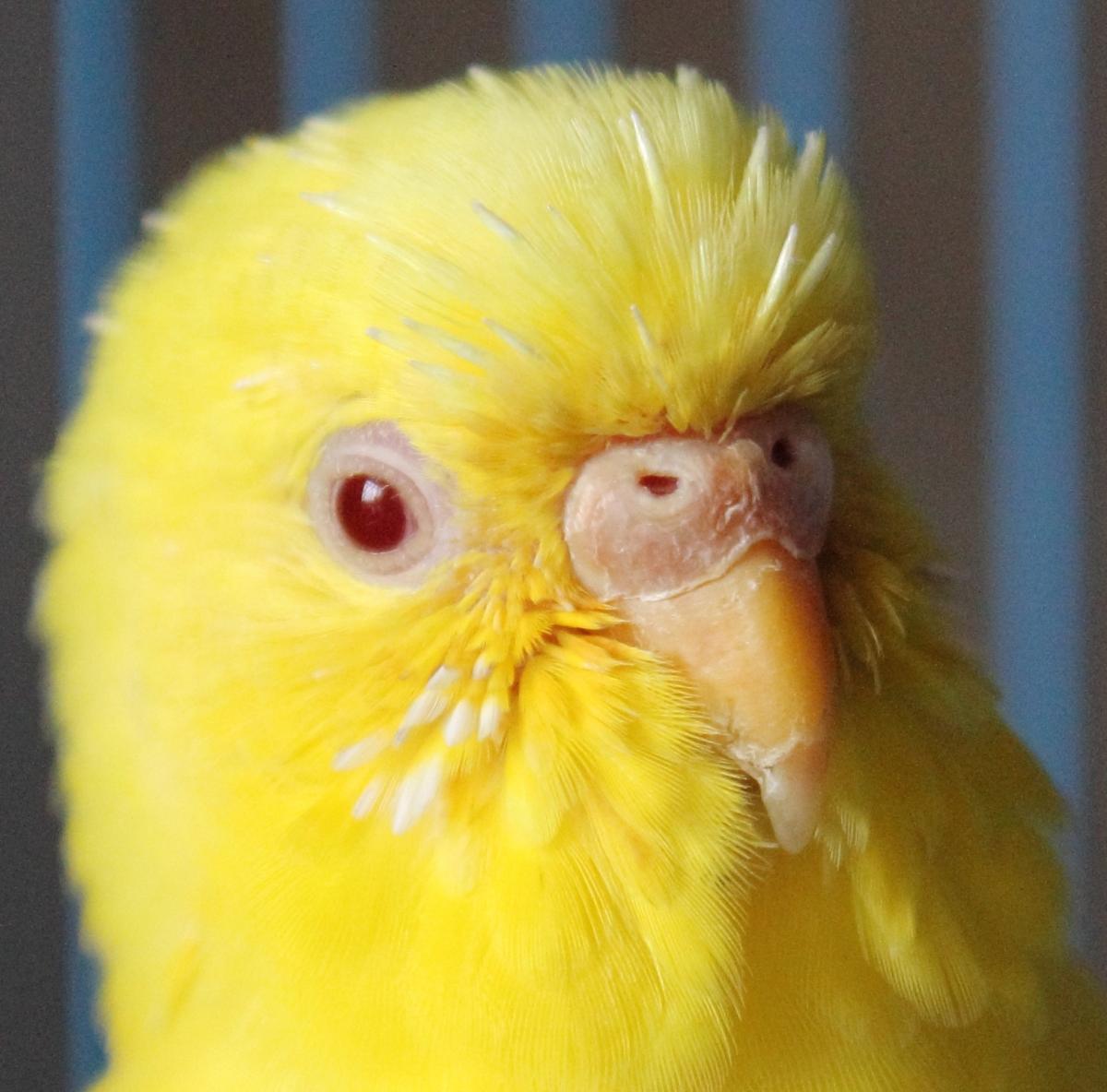 Цвет попугаев фото