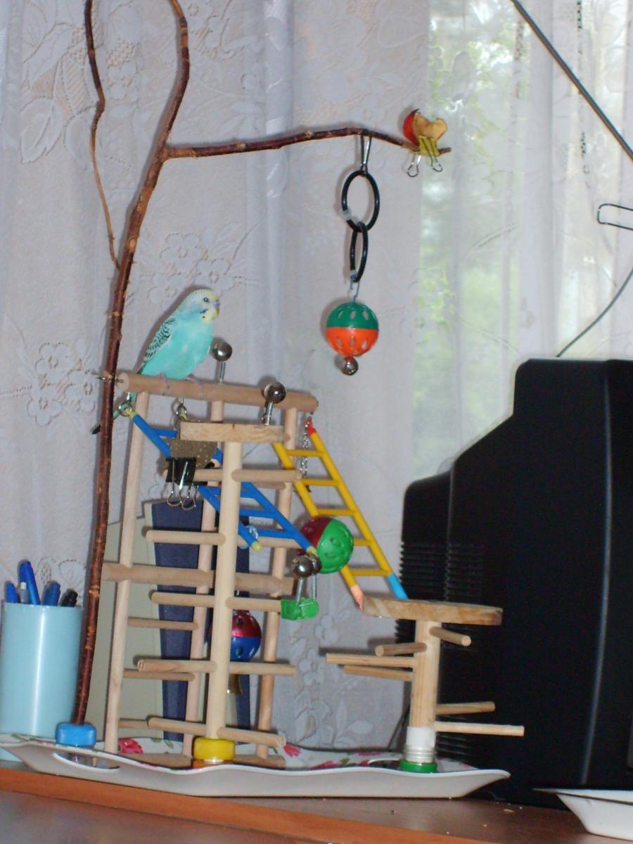 Как сделать попугаю площадку 287