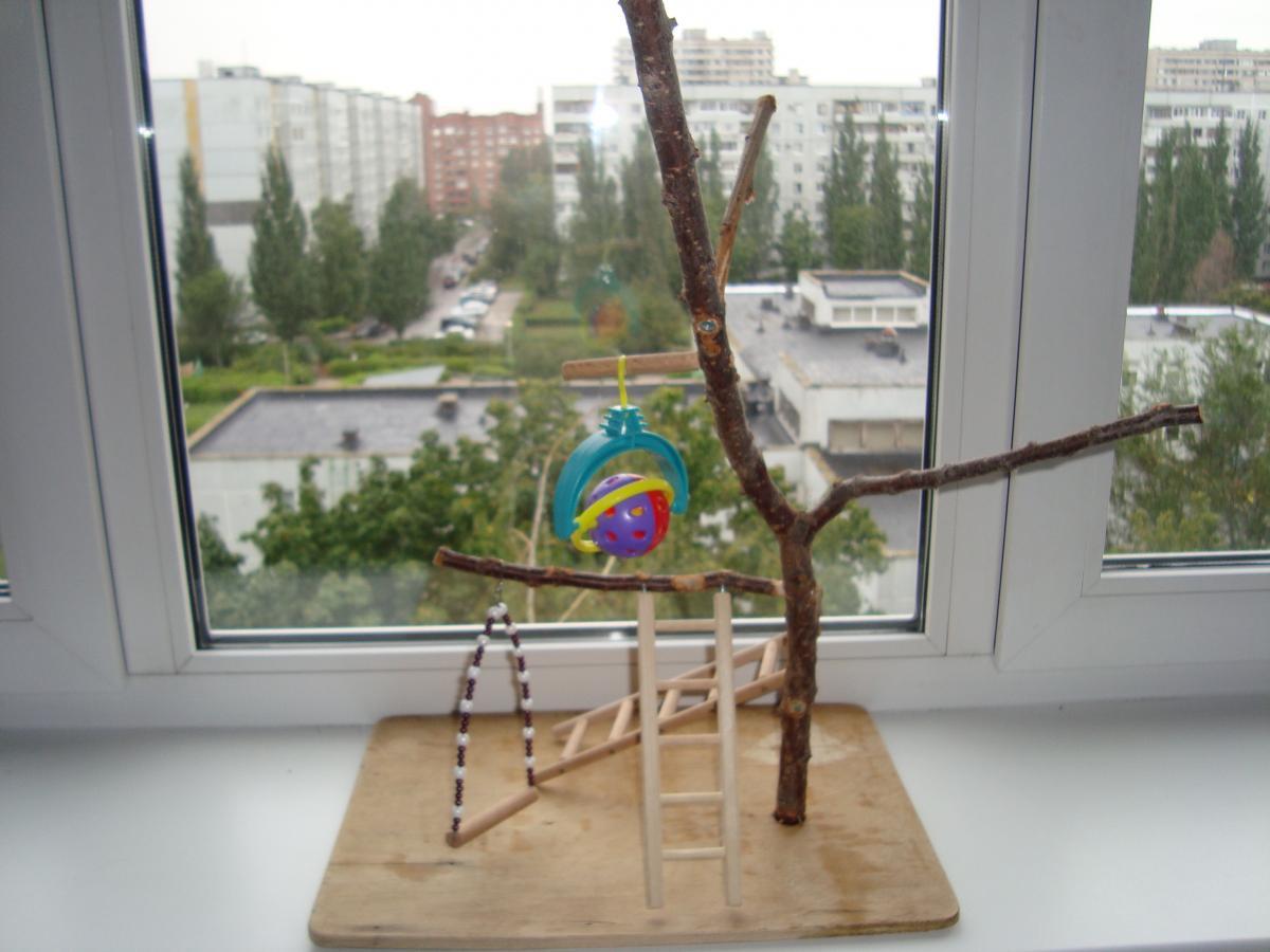Дерево с ветками для попугая кореллы Попугай корелла у вас