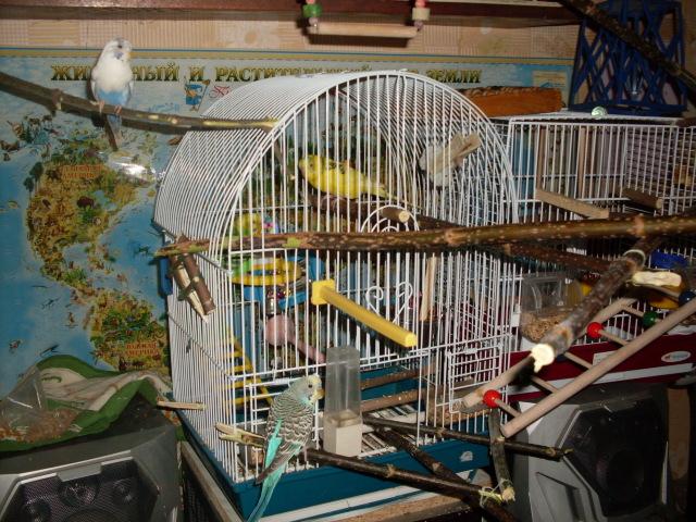 кокой домик нужен для попугаев ответ: