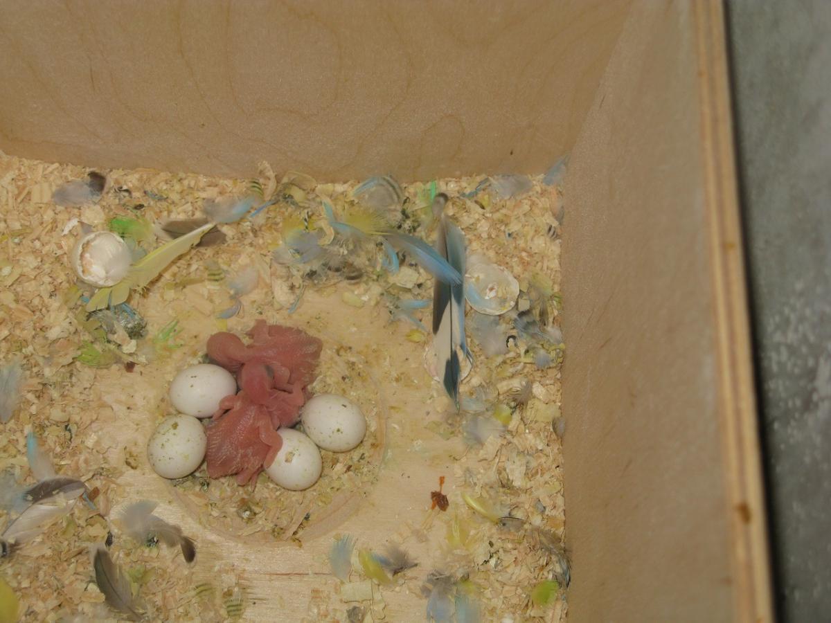 Гнездо для волнистых попугаев 87