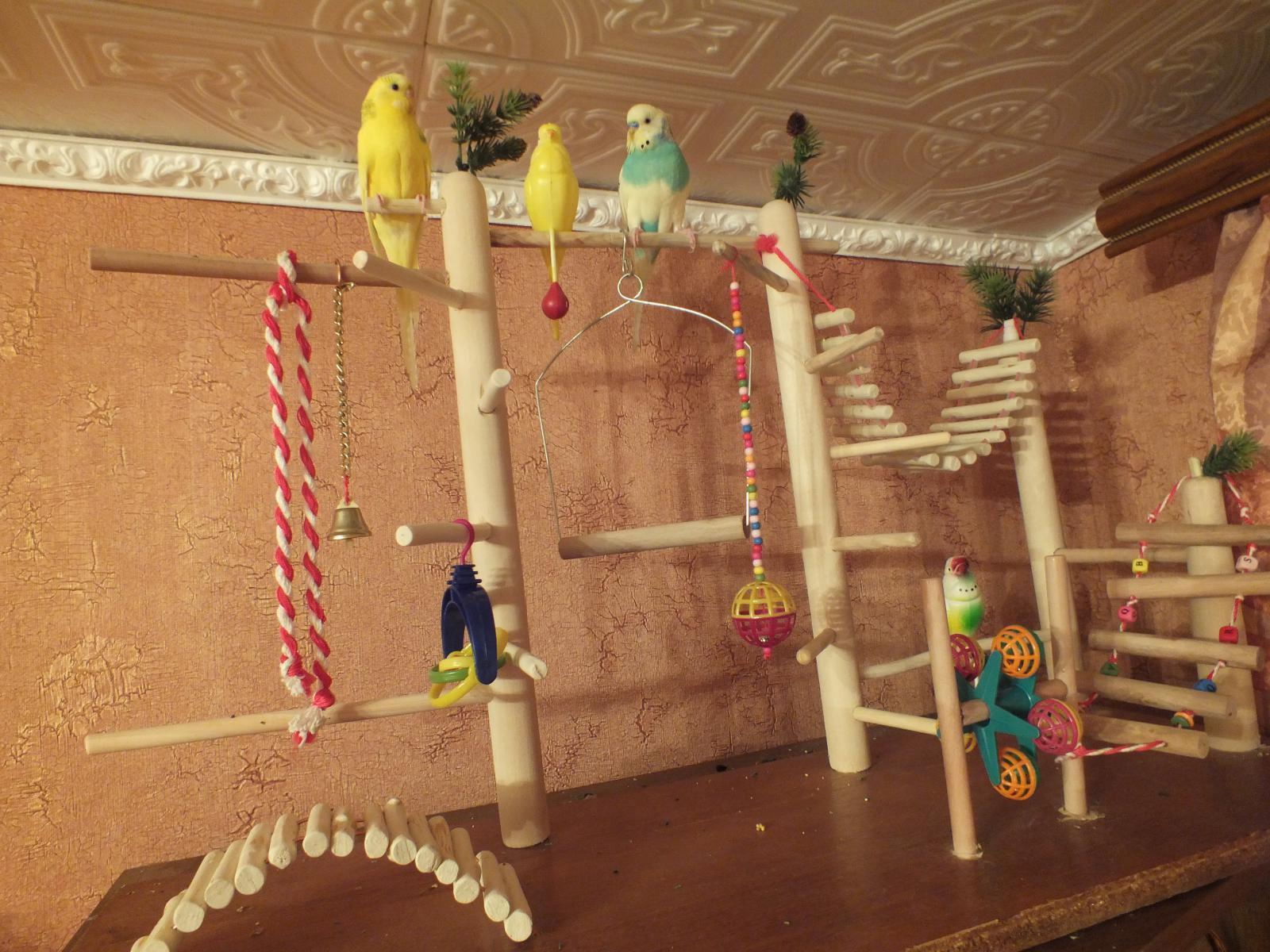 Игрушки для попугаев своими руками для волнистых