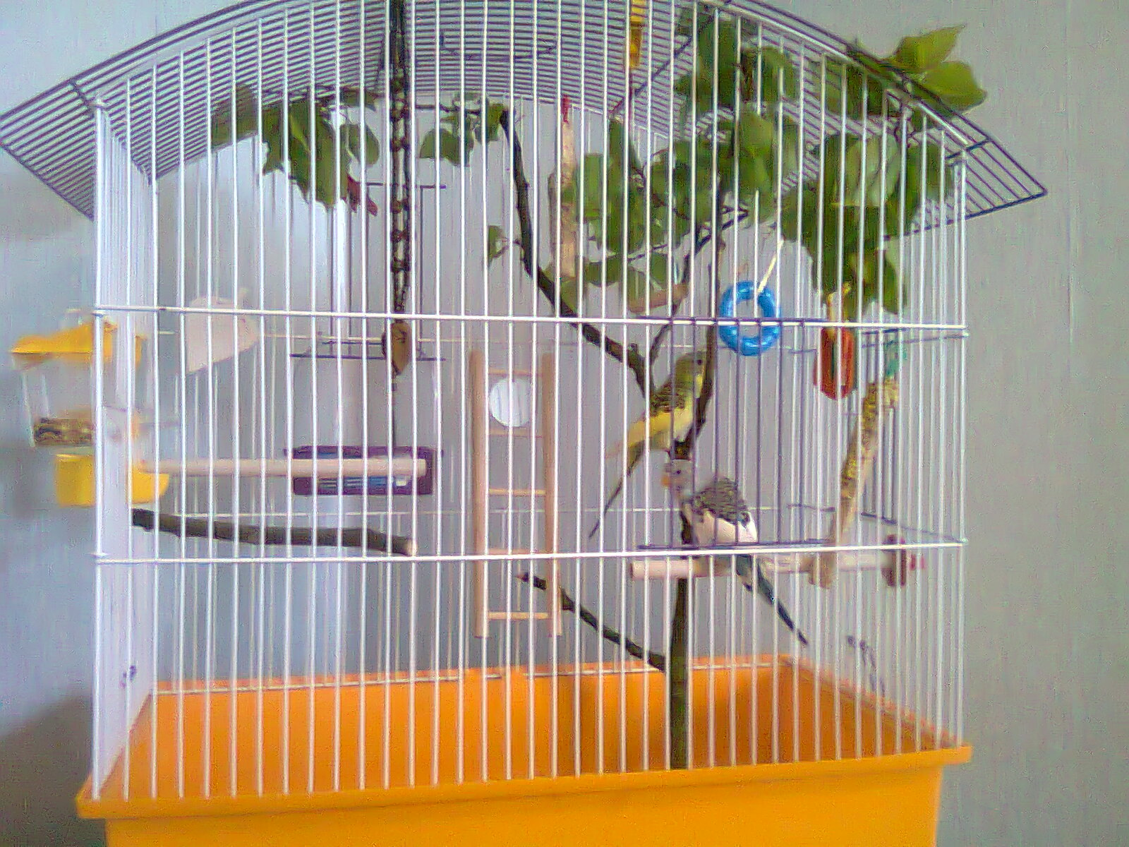 Как сделать в домашних условиях клетку для попугаев
