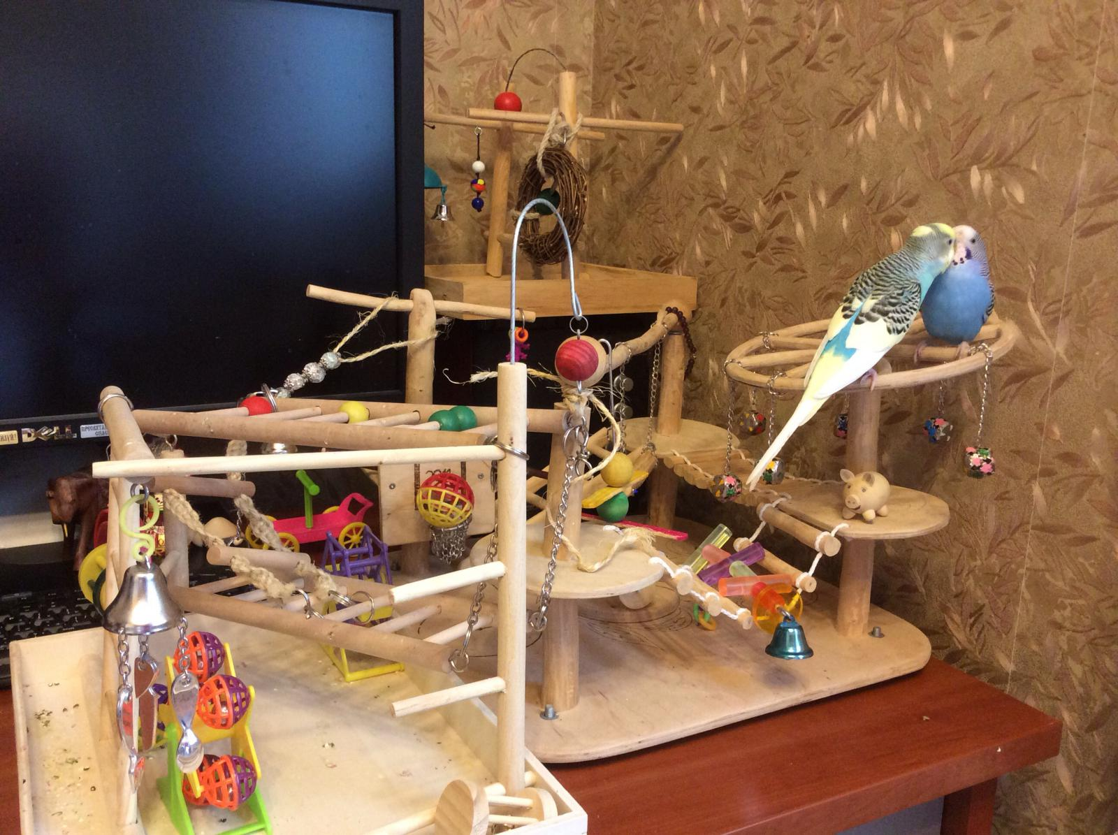 Игровая площадка для волнистого попугая своими руками - Стр. 22 - Форумы о попугаях