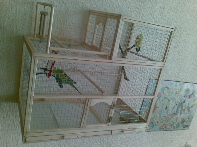 Клетка для попугаев своими руками фото