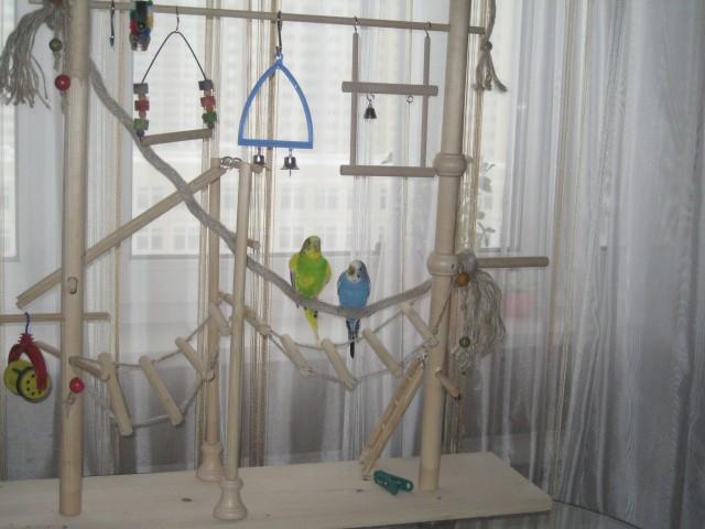 Игровые площадки для волнистых попугаев своими руками