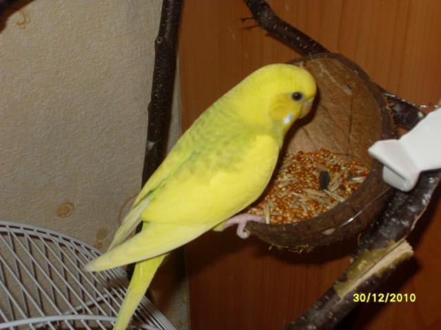 Кормушка для попугаев волнистых своими руками