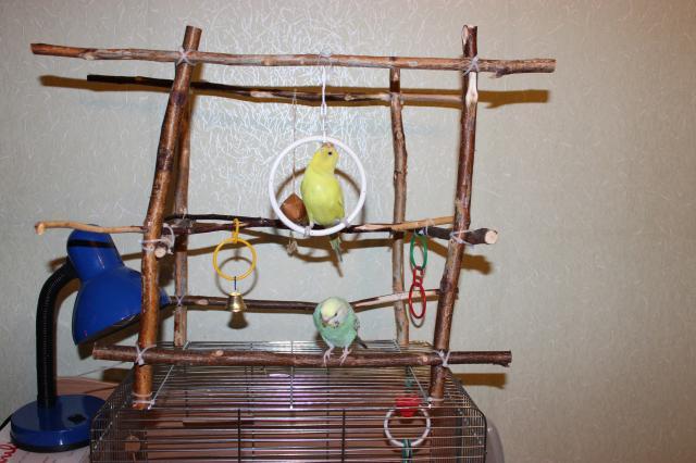 Как сделать площадку для волнистого попугая своими руками фото 242