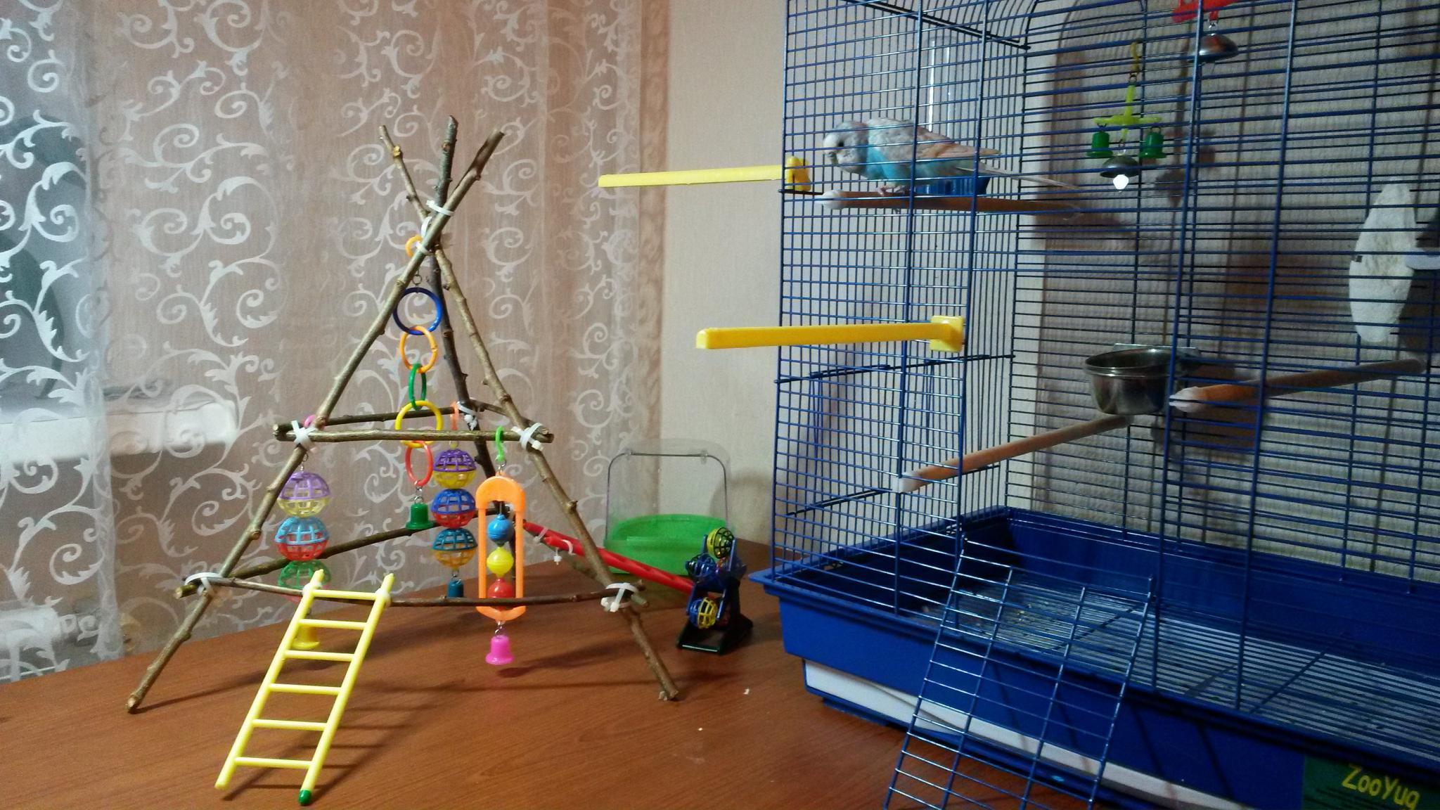 Как сделать попугаю площадку 281