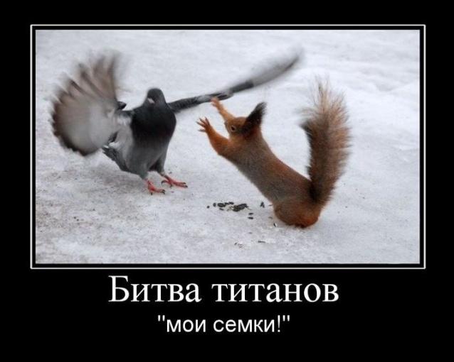 Болею, картинки смешные про семечки
