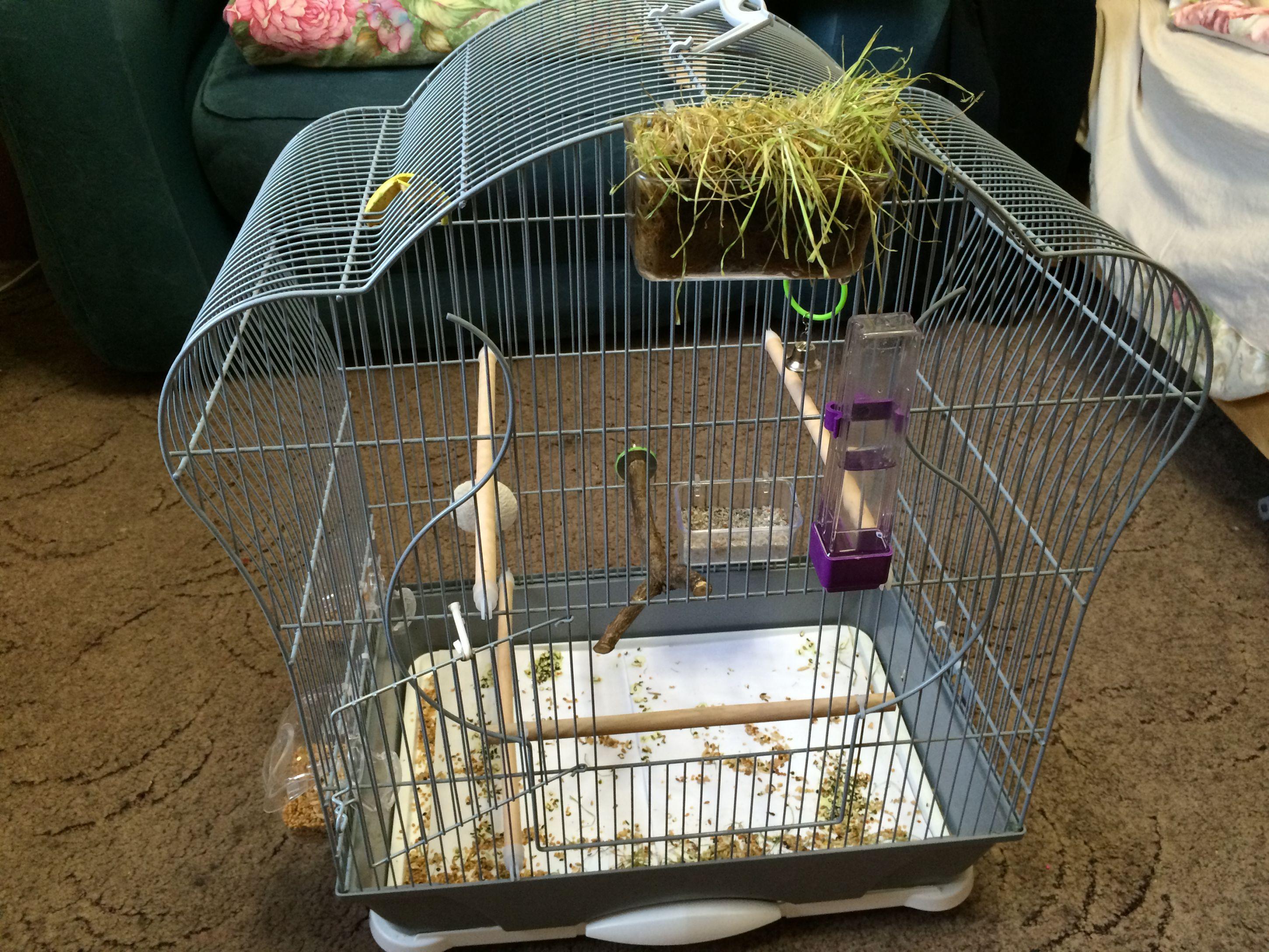 Можно ли сажать двух попугаев в одну клетку 12