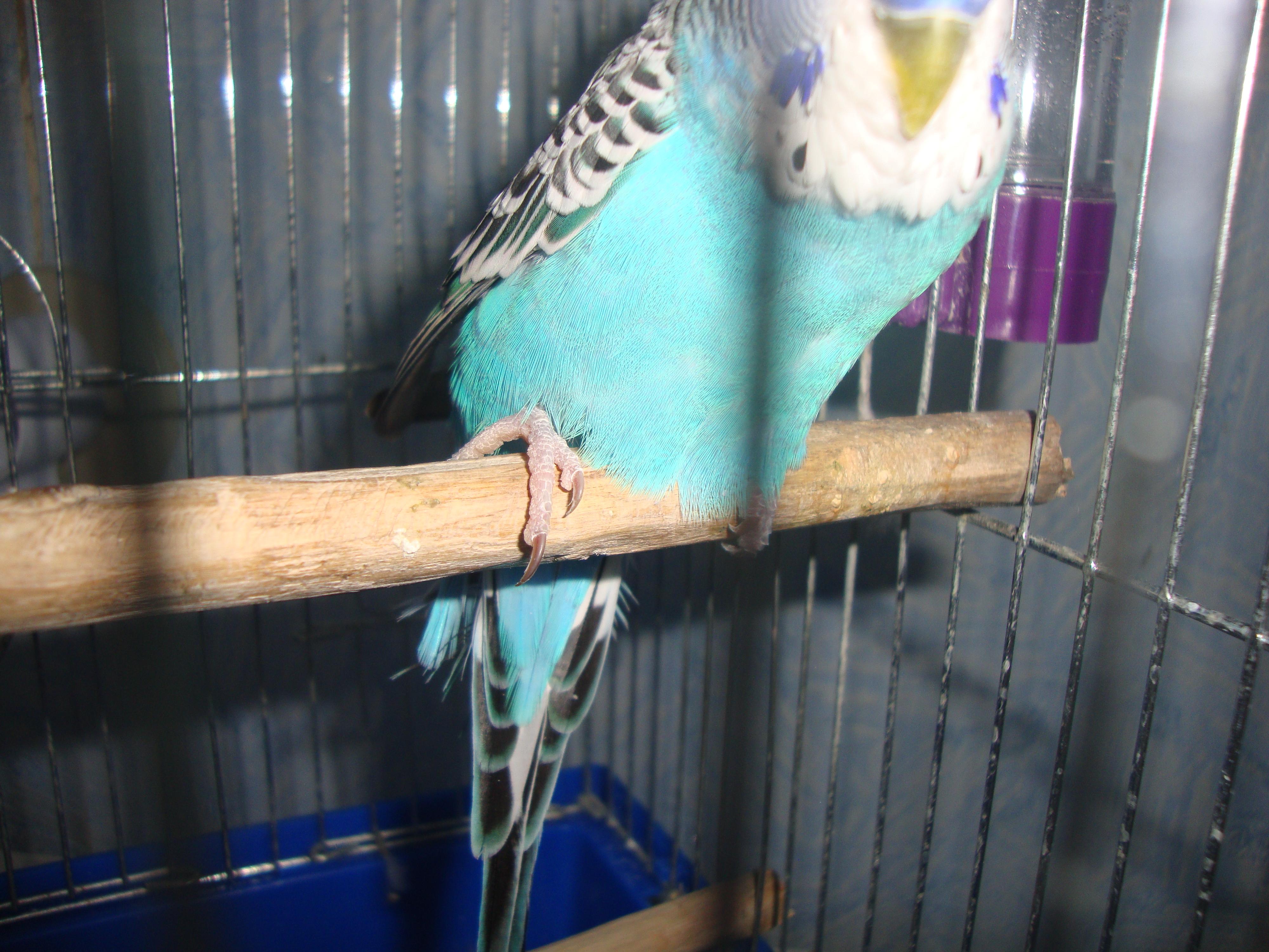 Дело не в том, что дайте ссылку на фото попугаев, у которых этих проблем нет