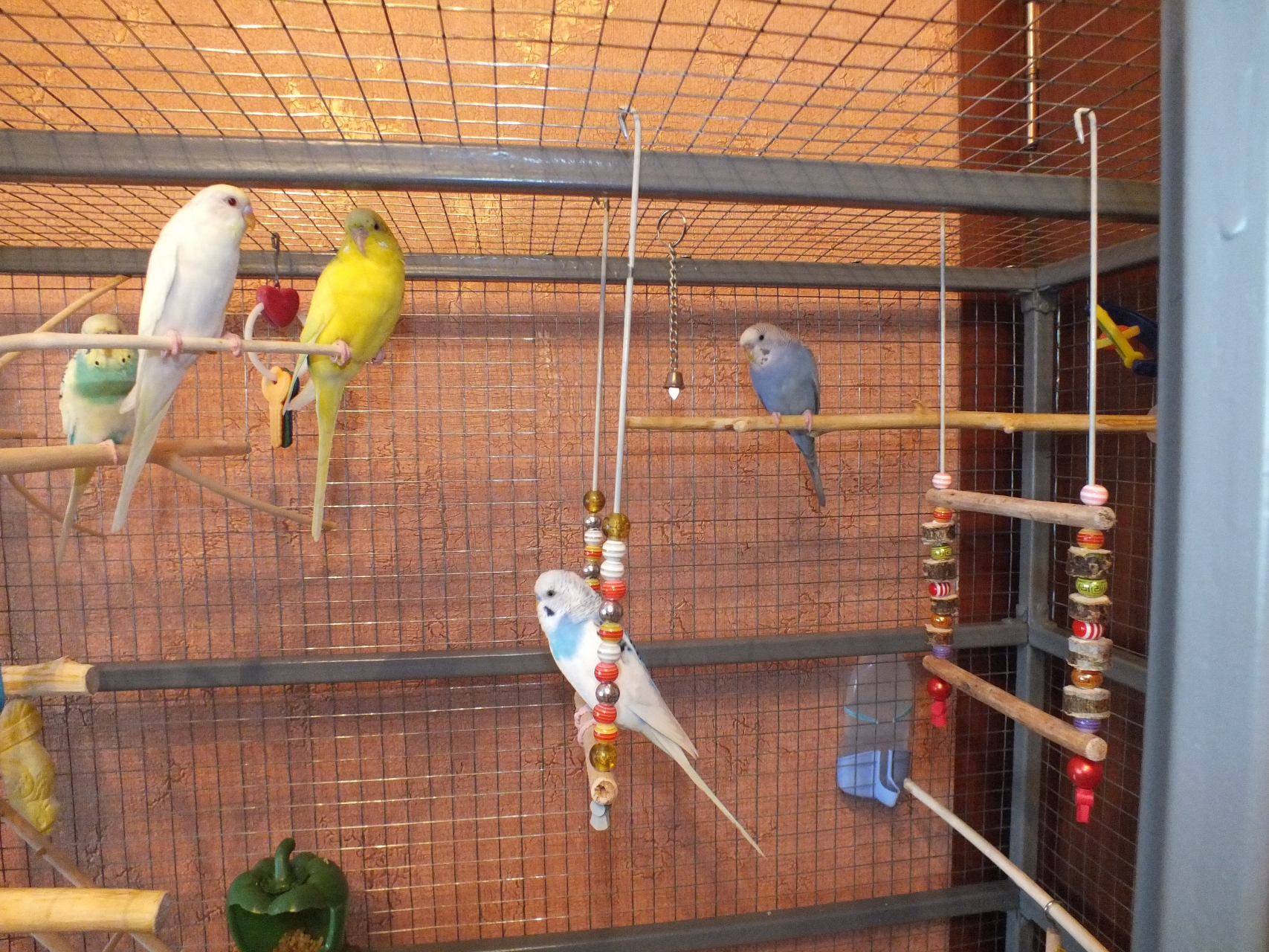 Как сделать домик для попугая своими руками фото