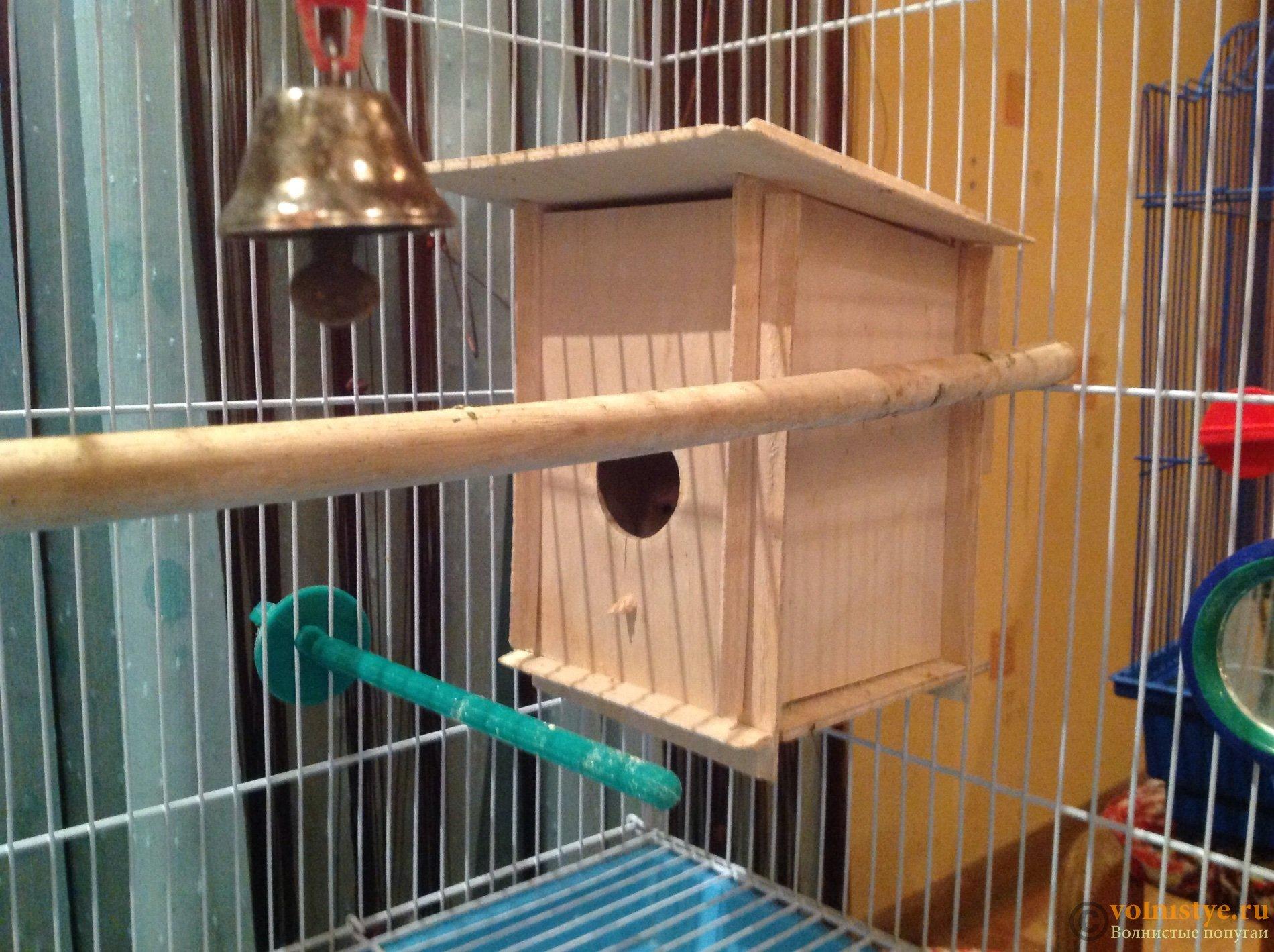 Волнистые попугаи размножение в домашних условиях 10