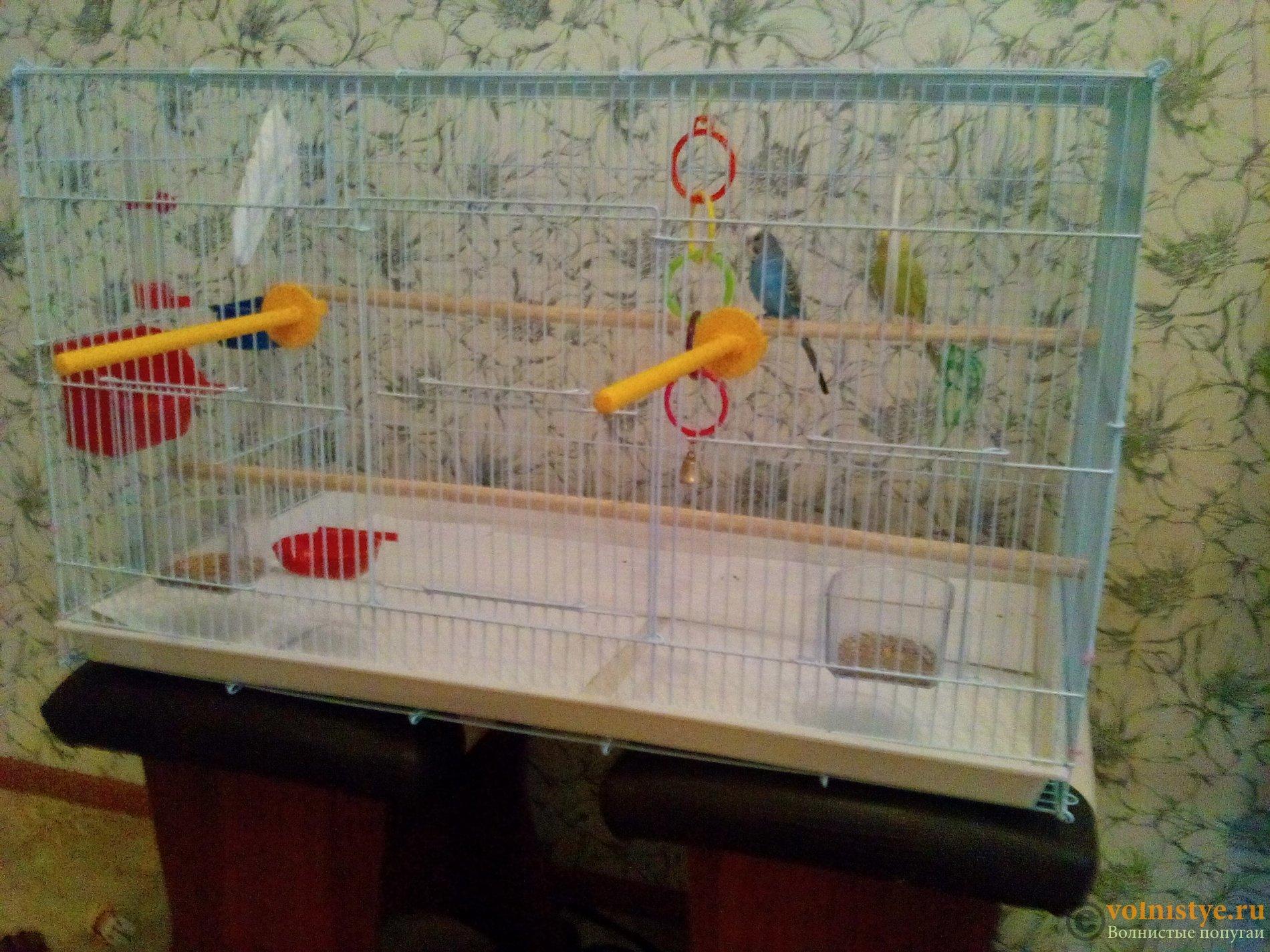 Гнездовой домик для волнистых попугаев своими руками