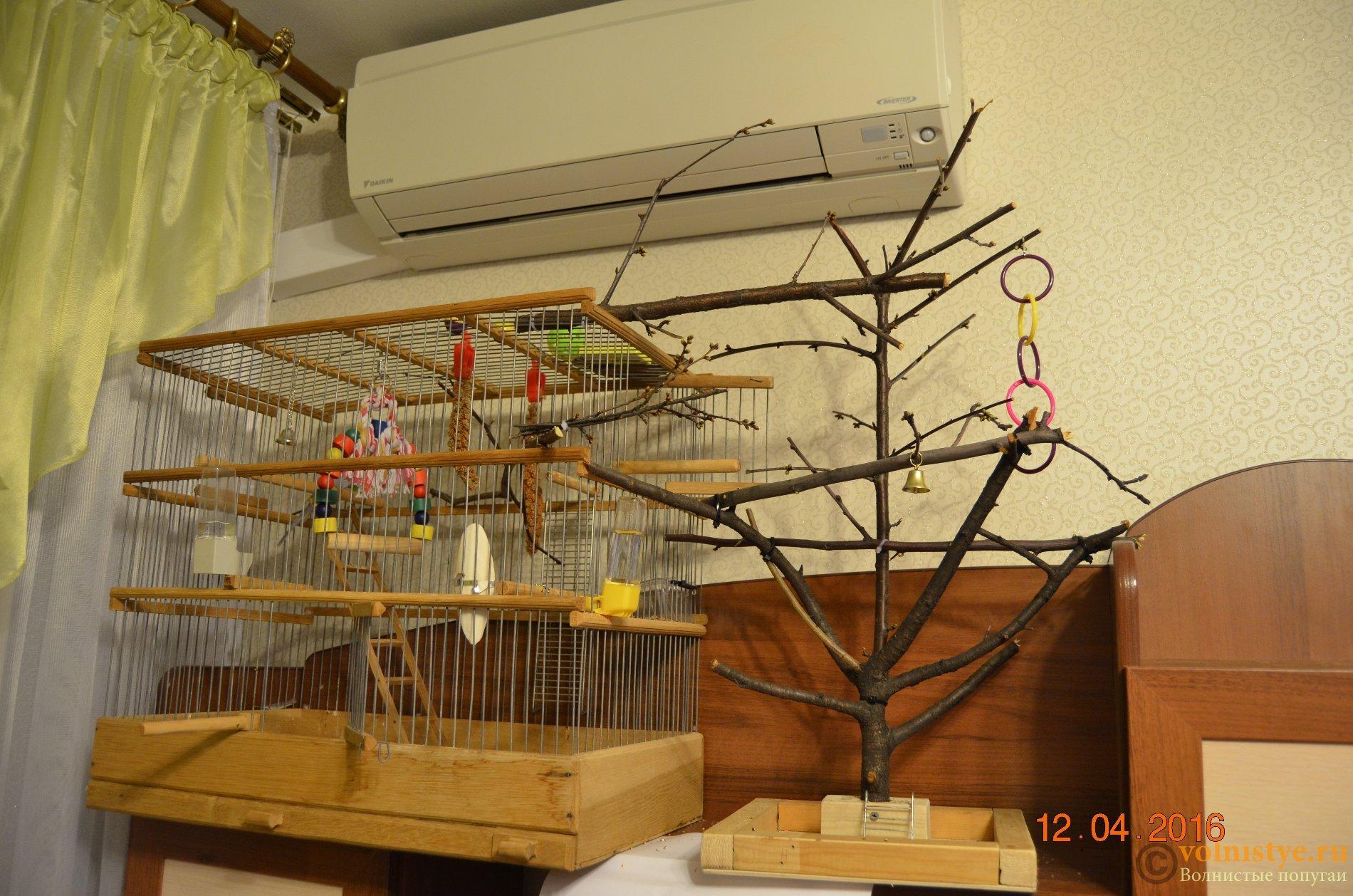 Что можно сделать волнистому попугаю своими руками фото 602