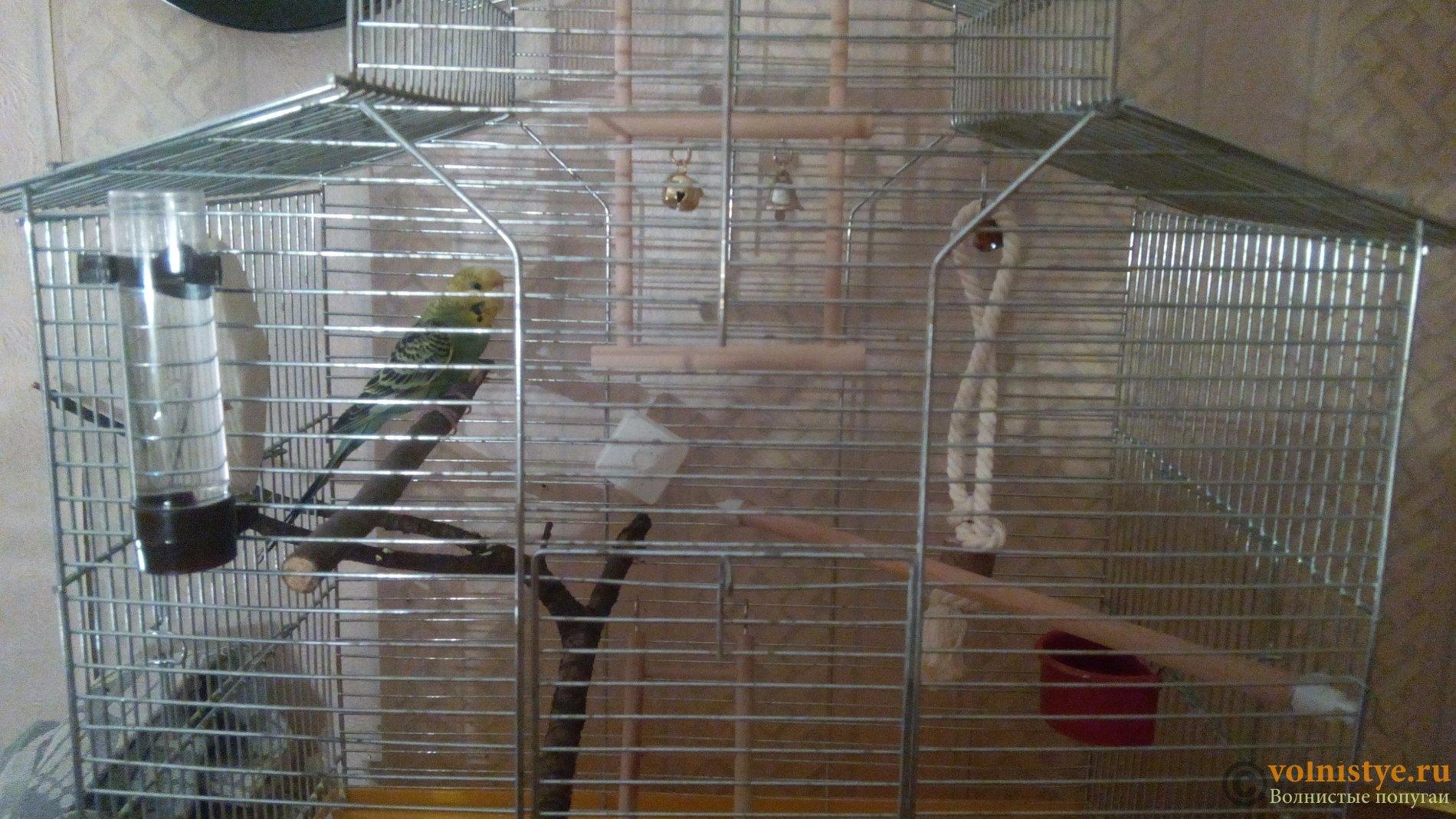 Поддон для клетки попугая своими руками