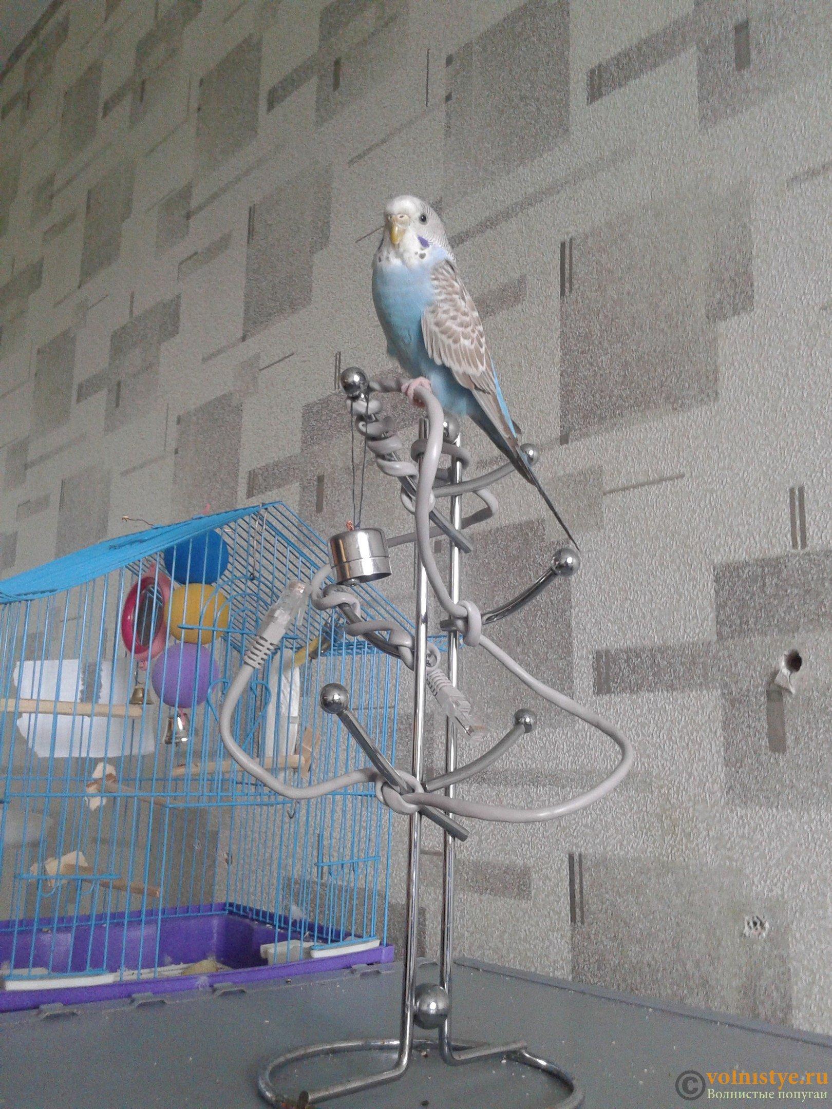 Что можно сделать волнистому попугаю своими руками фото 360