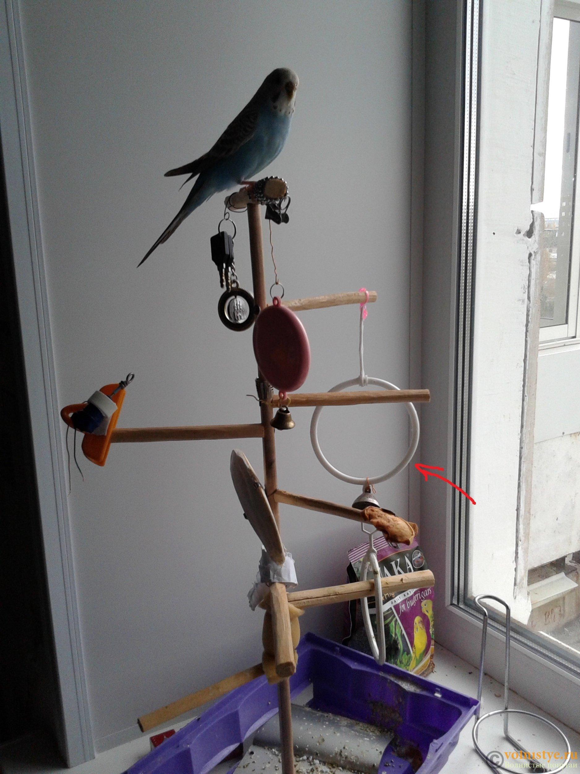 Что можно сделать волнистому попугаю своими руками