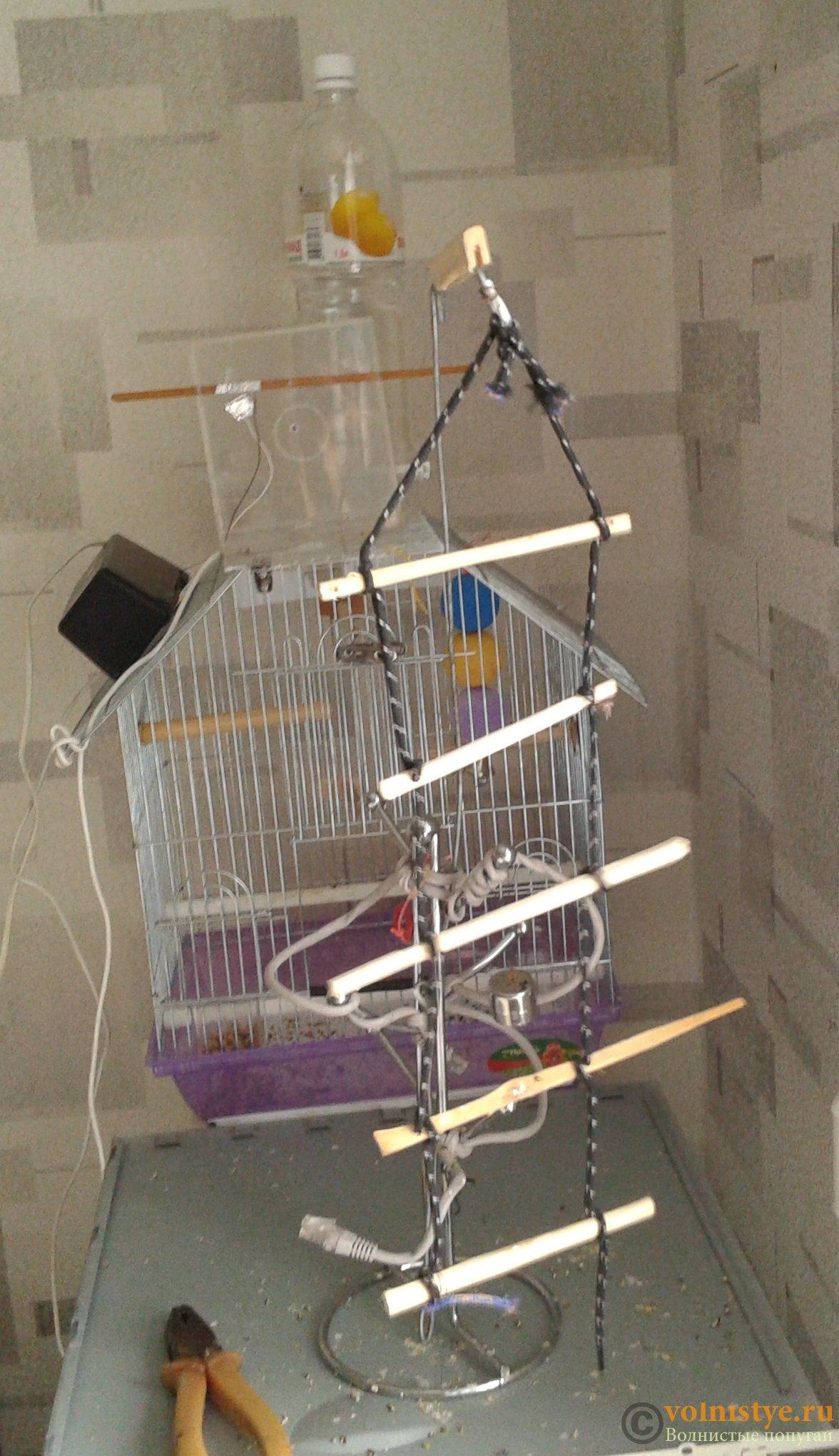 Что можно сделать волнистому попугаю своими руками фото 48