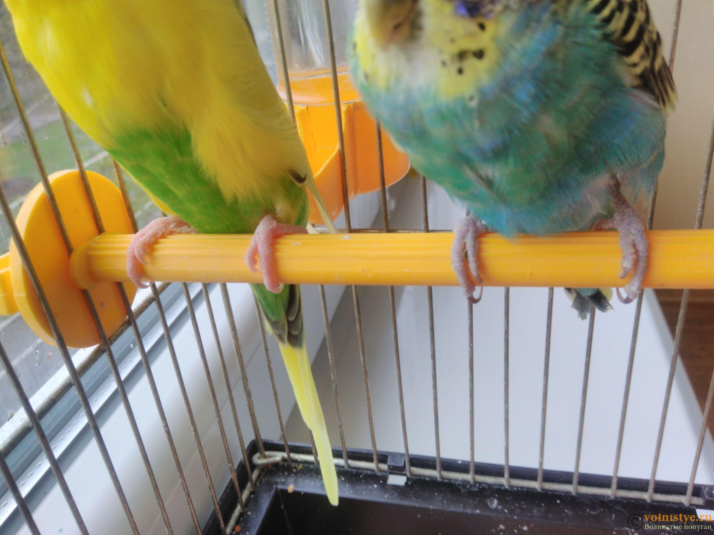 Все для волнистых попугаев