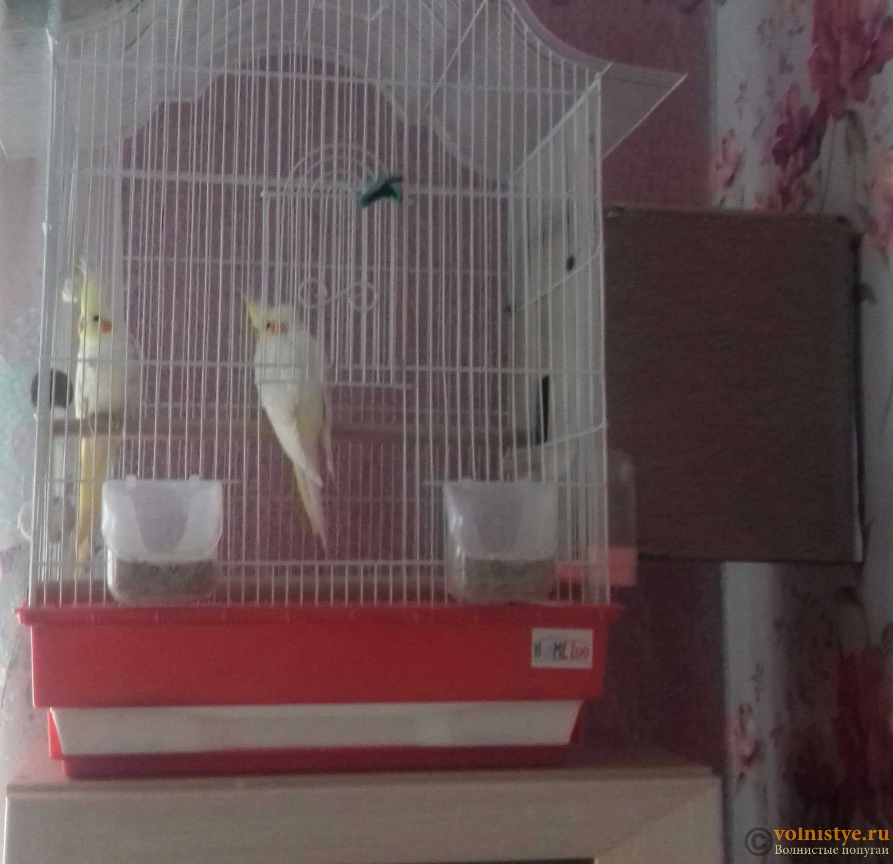 Гнездо для волнистых попугаев 7