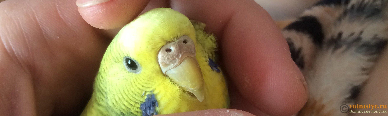 как трахать у попугая - 13