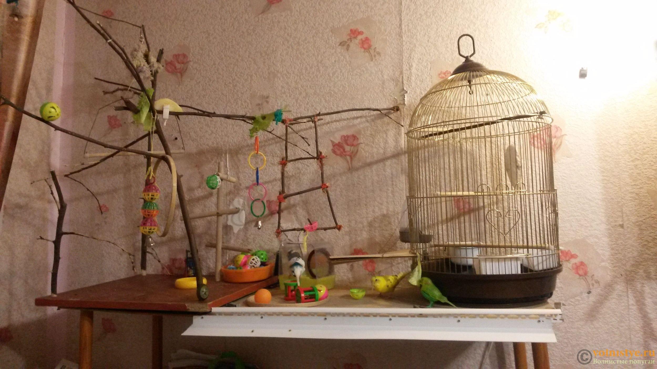 Что можно сделать волнистому попугаю своими руками фото 359