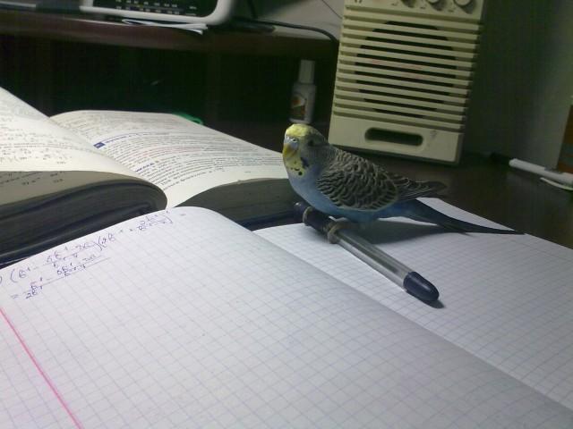 Учим алгебру - 20112011215.jpg