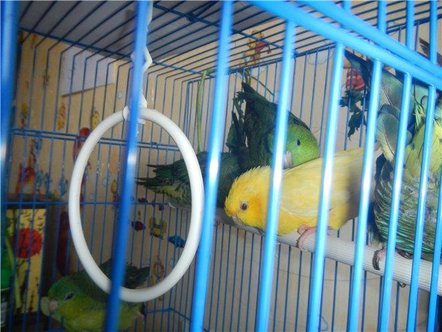 Попугаи. - 1.jpg