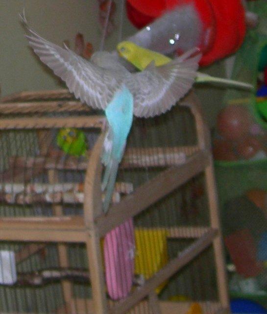 Волнистый попугай при лечении глаза идёт на поправку. - 10 июля2.jpg