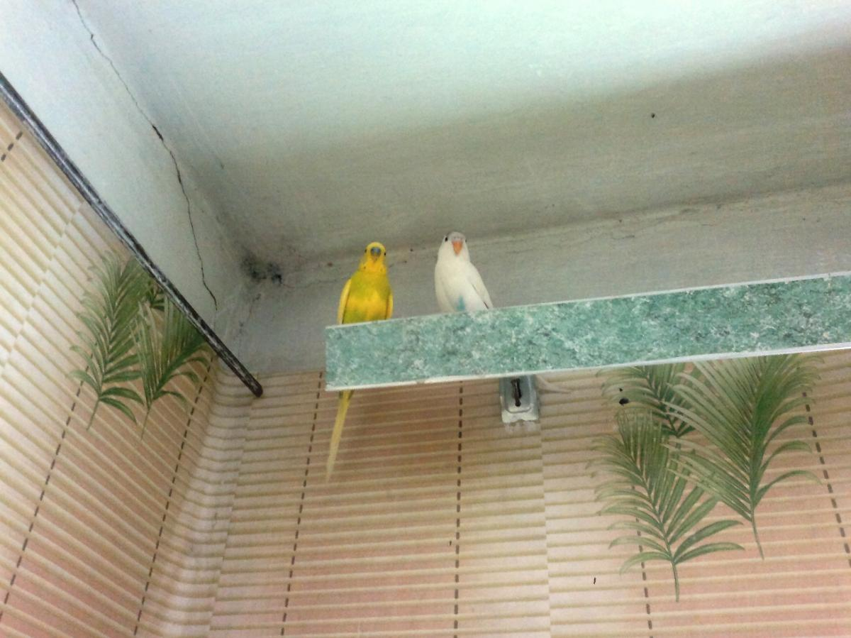 Птички - 2013-05-13-593.jpg