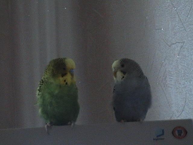 Это Фима и Фрося Сидят спиной к свету. - DSC01420.JPG