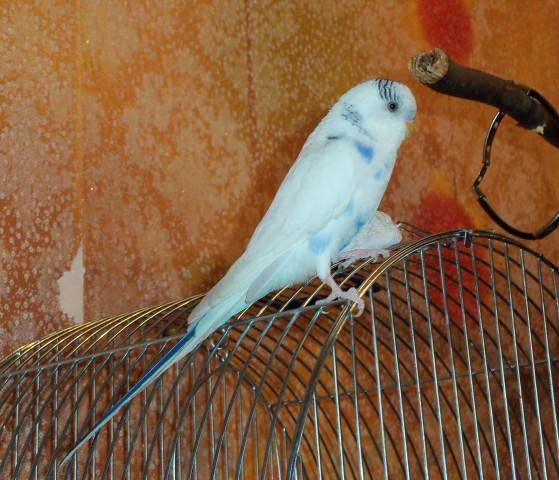 Боня-птиц - 100_2330.JPG