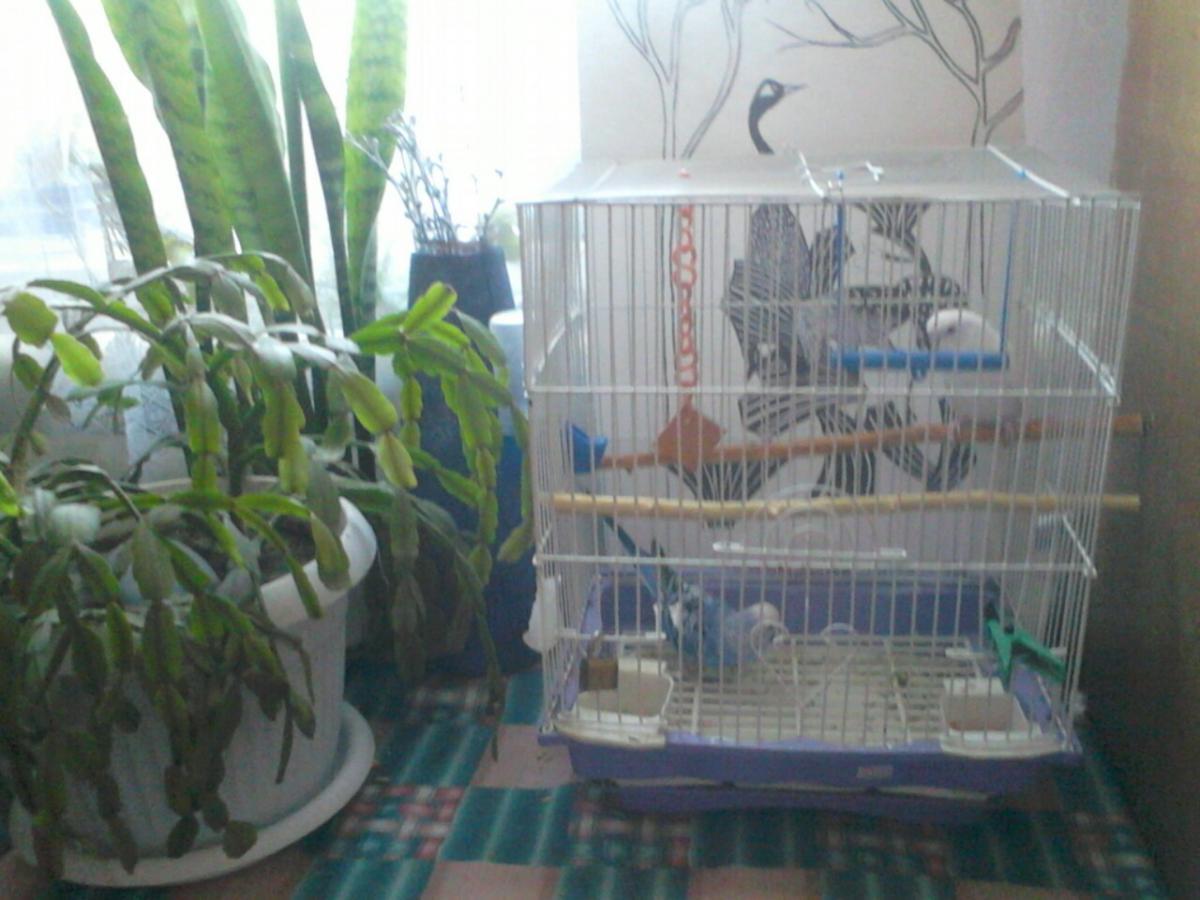 клетка моих птичек - IMG_20130720_103653[1].jpg