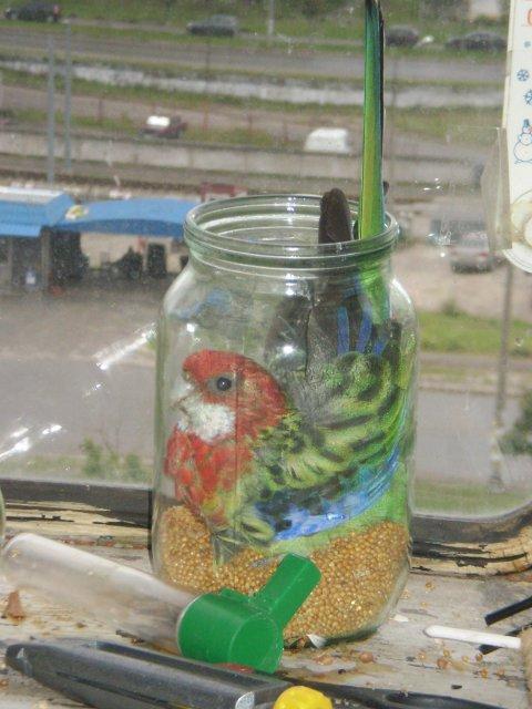 Попугай в банке с кормом. - попугайка.jpg
