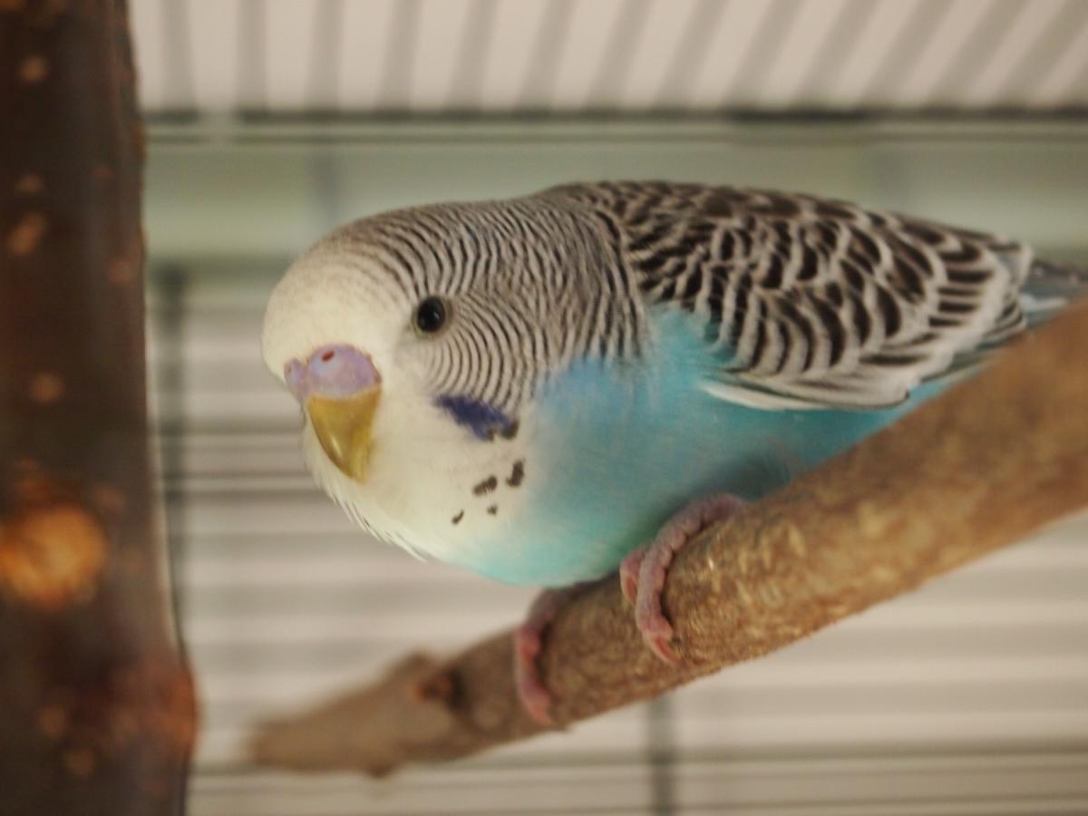 мальчик - Papagaj2.JPG