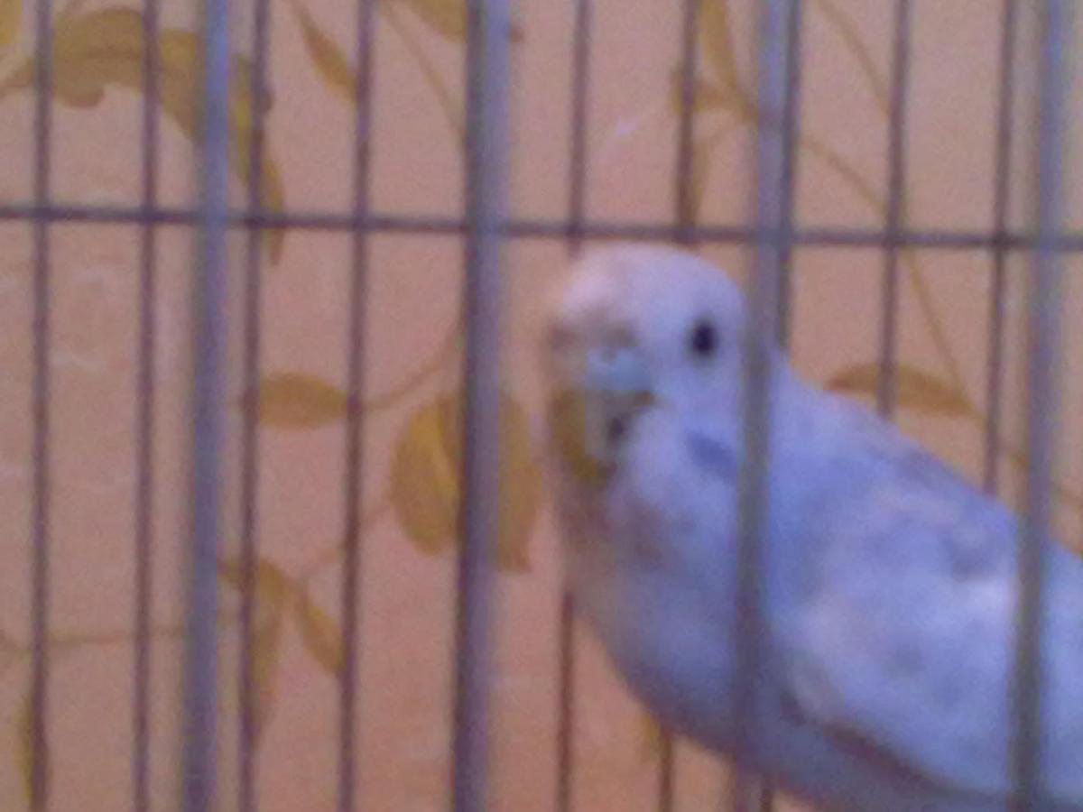 мой попугай - 27092013452.jpg