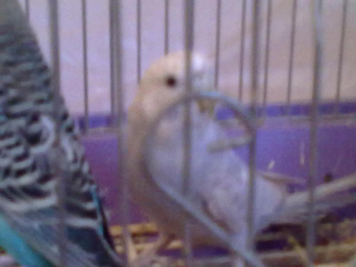 мой попугай - 27092013453.jpg