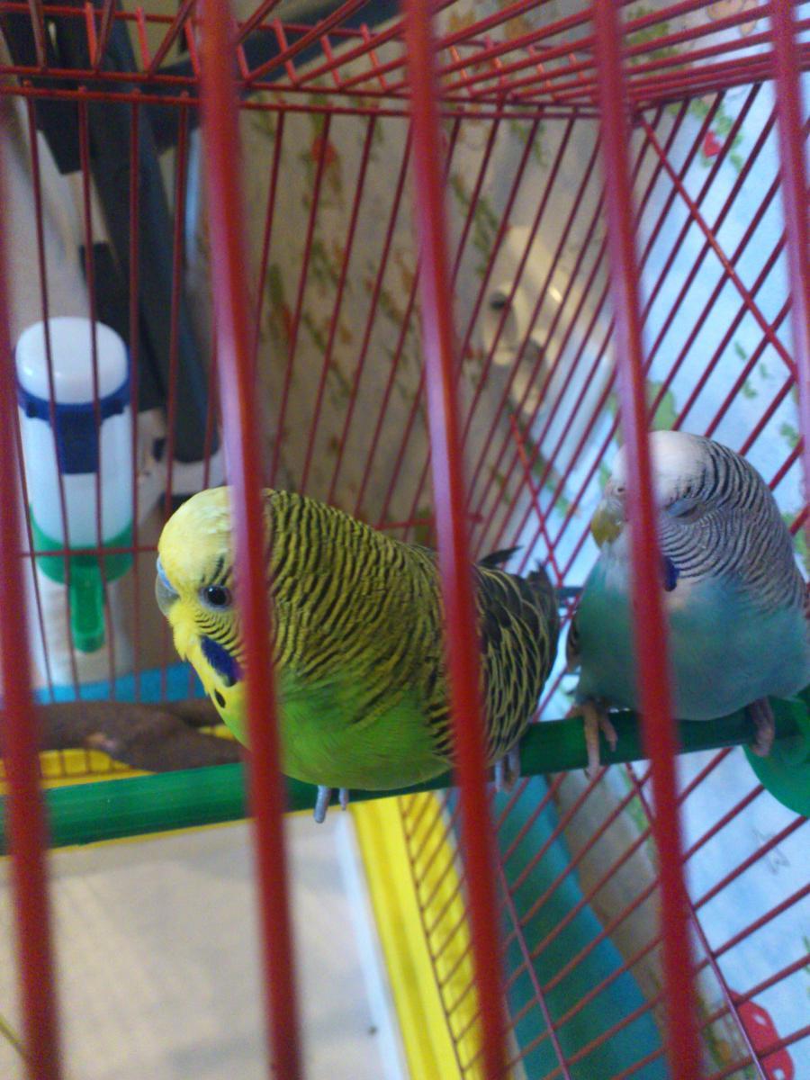 зеленый мальчик, голубая девочка - DSC_0386.JPG