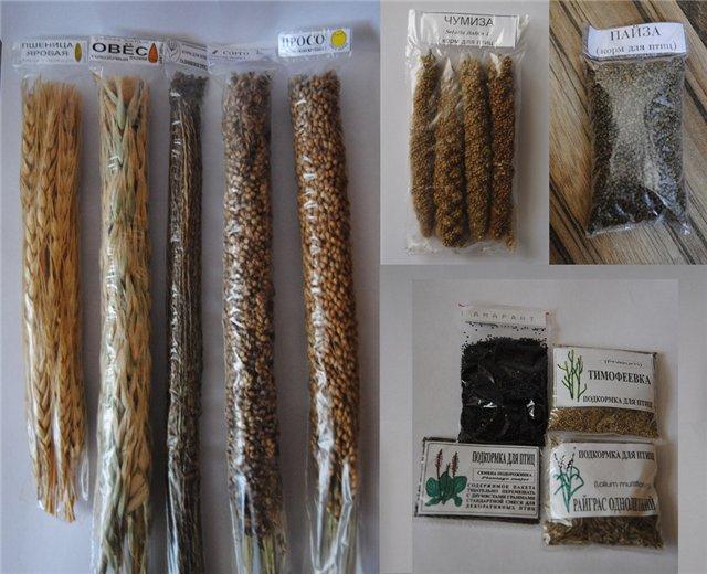 пшеница, овес, пальчиковое просо, сорго, просо желтое - пшеница, овес, пальчиковое просо, сорго, просо желтое..jpg