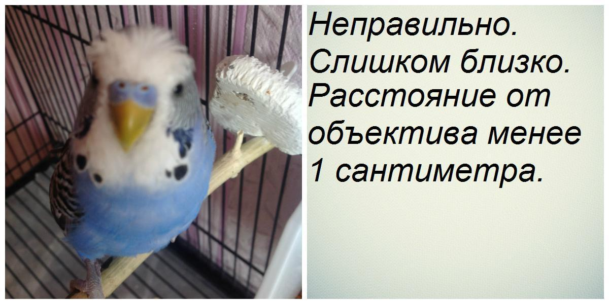 Неправильно сделанное фото - collage (1).jpg
