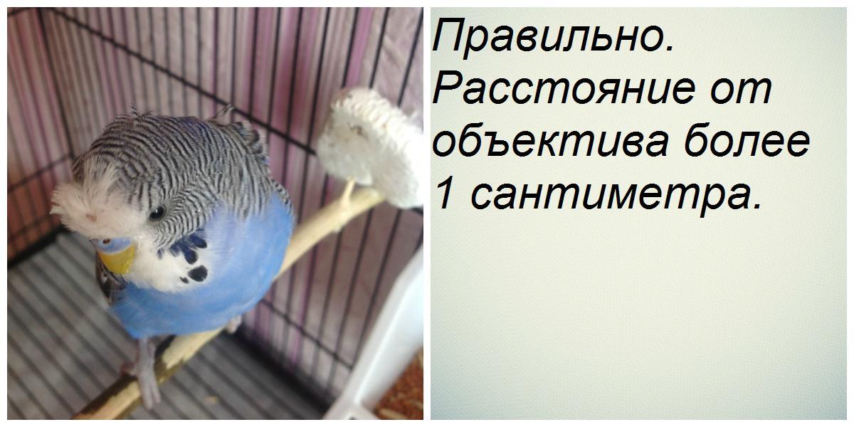 Правильно сделанное фото - collage1 (1).jpg