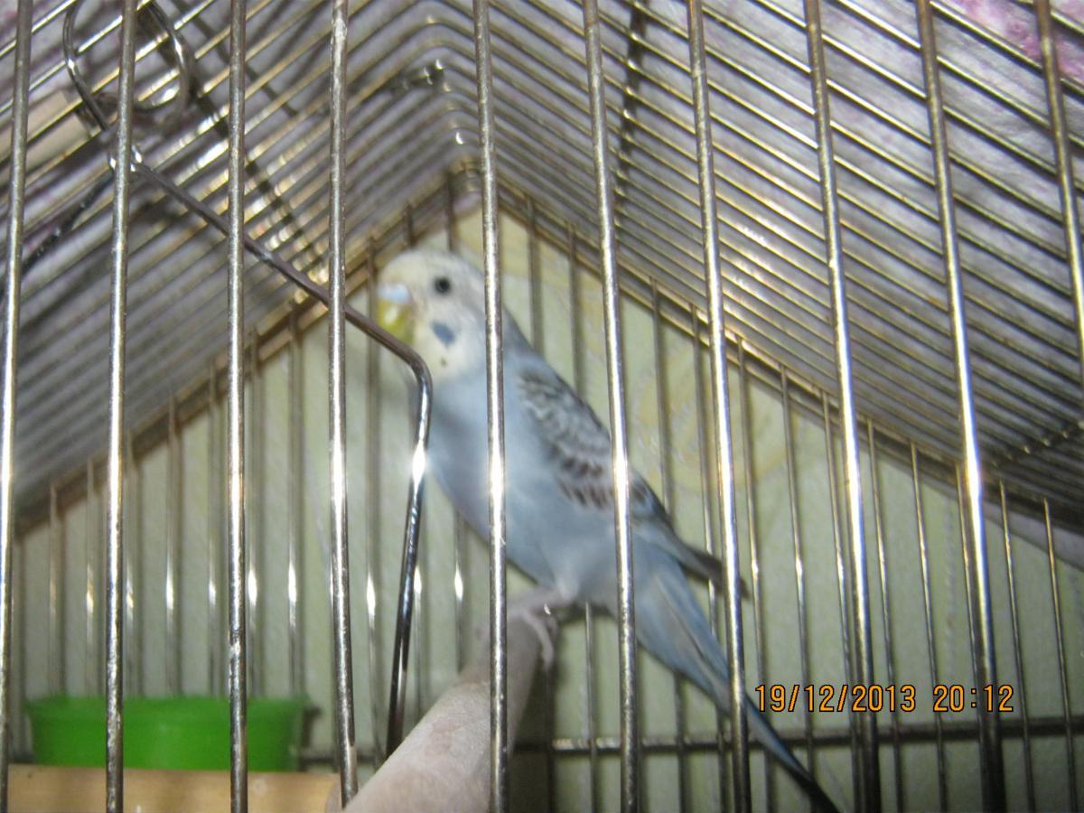 Птичка - IMG_4257[1].JPG