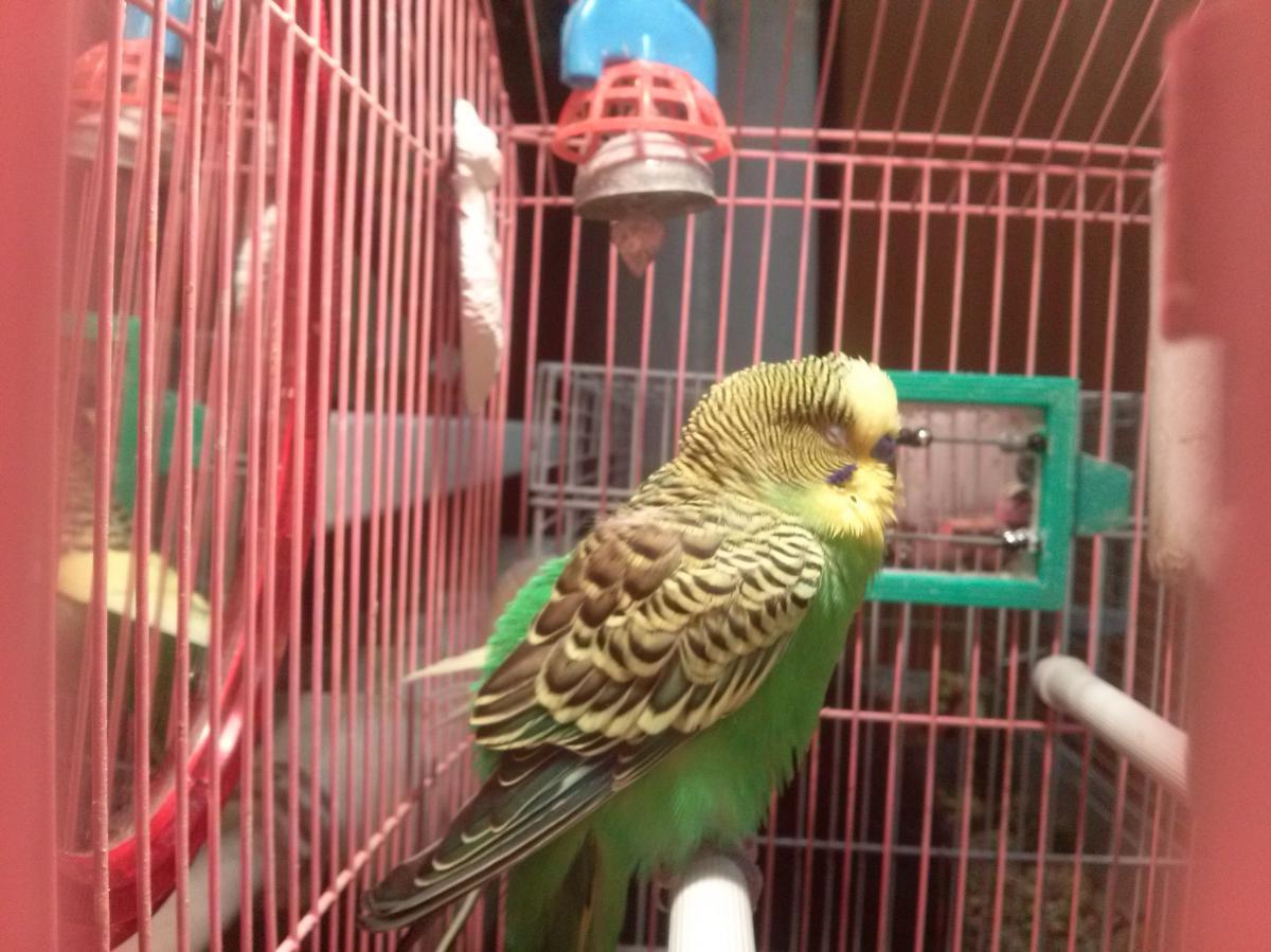 фото птички роки - CAM00028.jpg