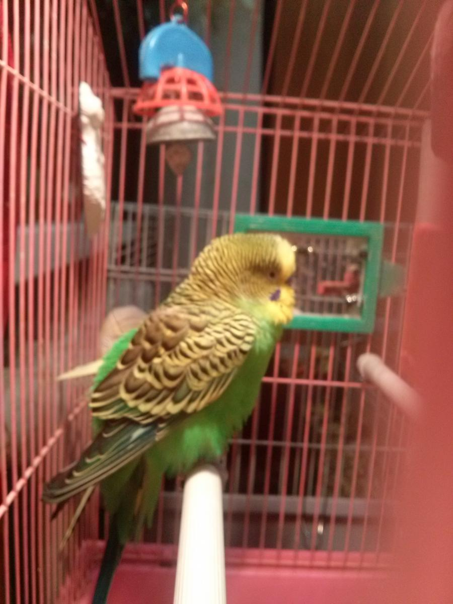 фото птички в клетке - CAM00029.jpg