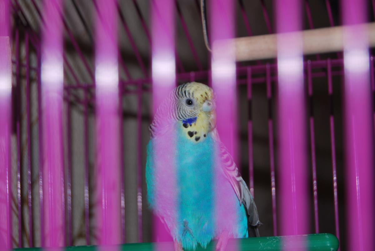 Птичка в полный рост - DSC_9198.JPG