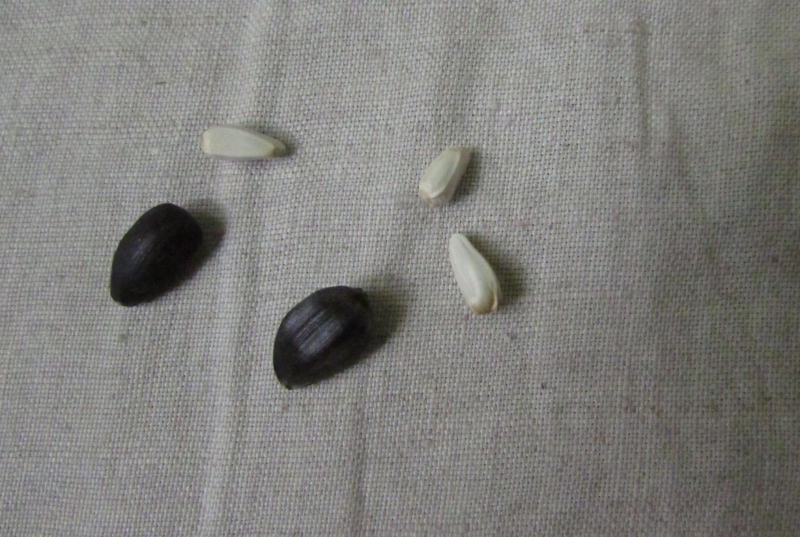 Белые семена - это тоже семечки? - IMG_1230.JPG