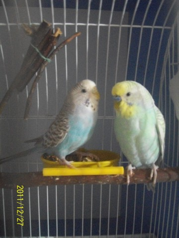 Аркаша (справа) 8 месяцев Маша (слева) 5 месяцев - ЛИЗА 020.jpg